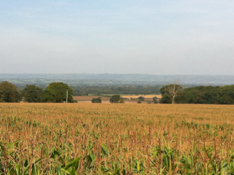 View looking across Chilton and Mark Moors